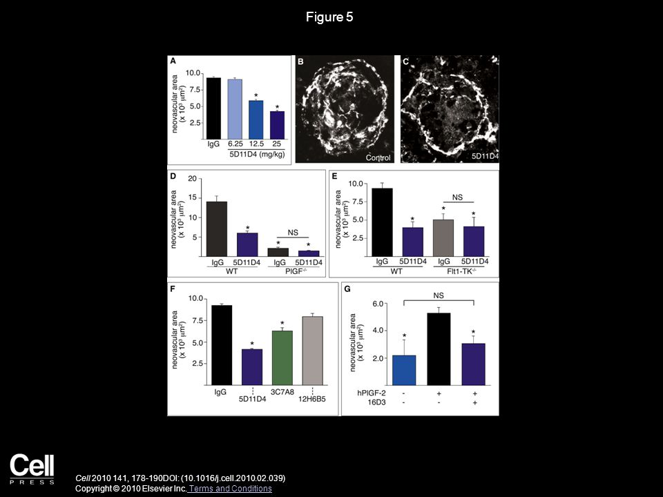Figure 5 Cell 2010 141, 178-190DOI: (10.1016/j.cell.2010.02.039) Copyright © 2010 Elsevier Inc.