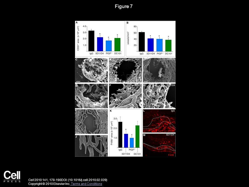 Figure S1 Cell 2010 141, 178-190DOI: (10.1016/j.cell.2010.02.039) Copyright © 2010 Elsevier Inc.