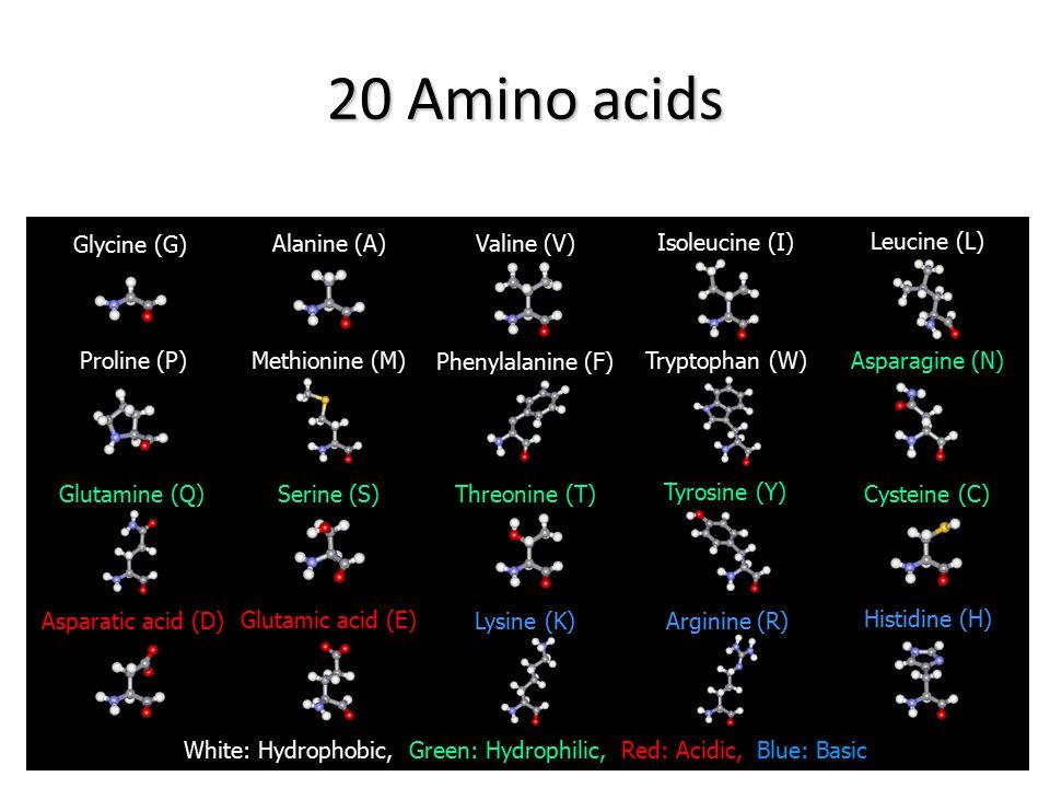 20 Amino acids Glycine (G) Glutamic acid (E) Asparatic acid (D) Methionine (M) Threonine (T) Serine (S) Glutamine (Q) Asparagine (N) Tryptophan (W) Ph