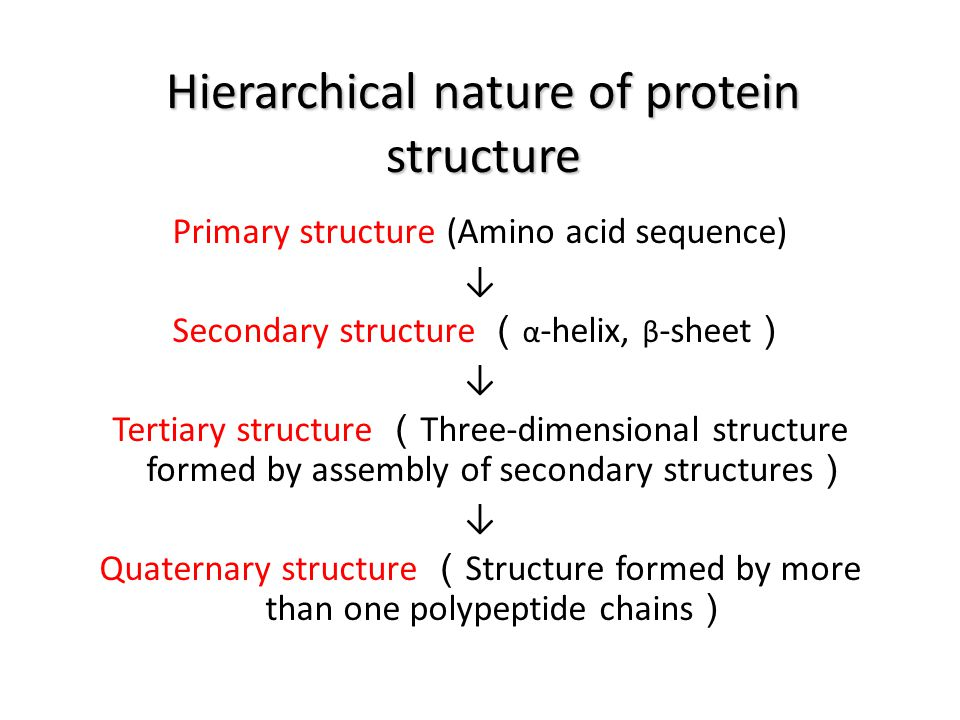 Hierarchical nature of protein structure Primary structure (Amino acid sequence) ↓ Secondary structure ( α -helix, β -sheet ) ↓ Tertiary structure ( T