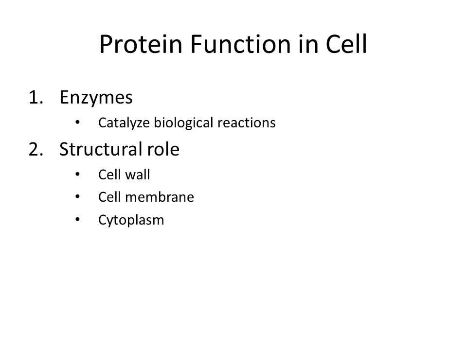 Protein Function in Cell 1.Enzymes Catalyze biological reactions 2.Structural role Cell wall Cell membrane Cytoplasm