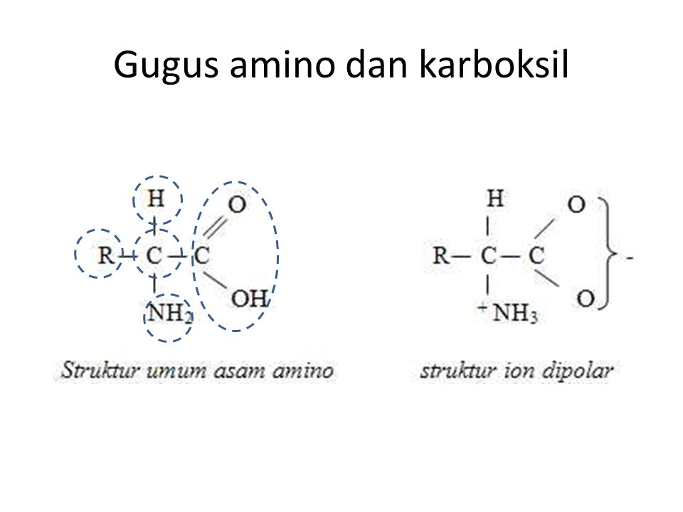 Gugus amino dan karboksil