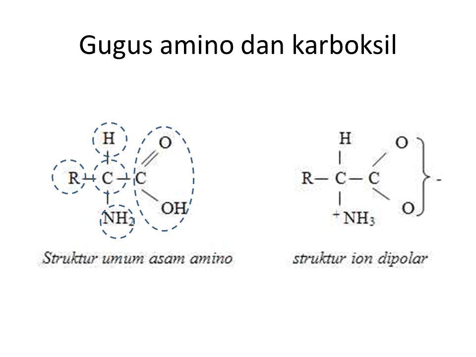 20 Amino acids Glycine (G) Glutamic acid (E) Asparatic acid (D) Methionine (M) Threonine (T) Serine (S) Glutamine (Q) Asparagine (N) Tryptophan (W) Phenylalanine (F) Cysteine (C) Proline (P) Leucine (L) Isoleucine (I) Valine (V) Alanine (A) Histidine (H) Lysine (K) Tyrosine (Y) Arginine (R) White: Hydrophobic, Green: Hydrophilic, Red: Acidic, Blue: Basic