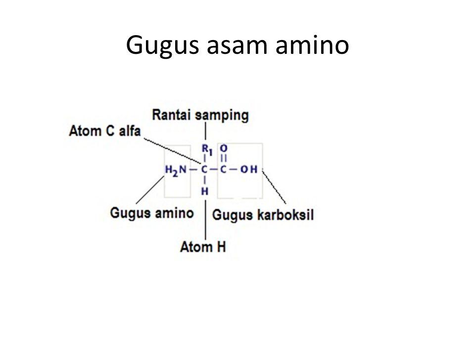 Gugus asam amino