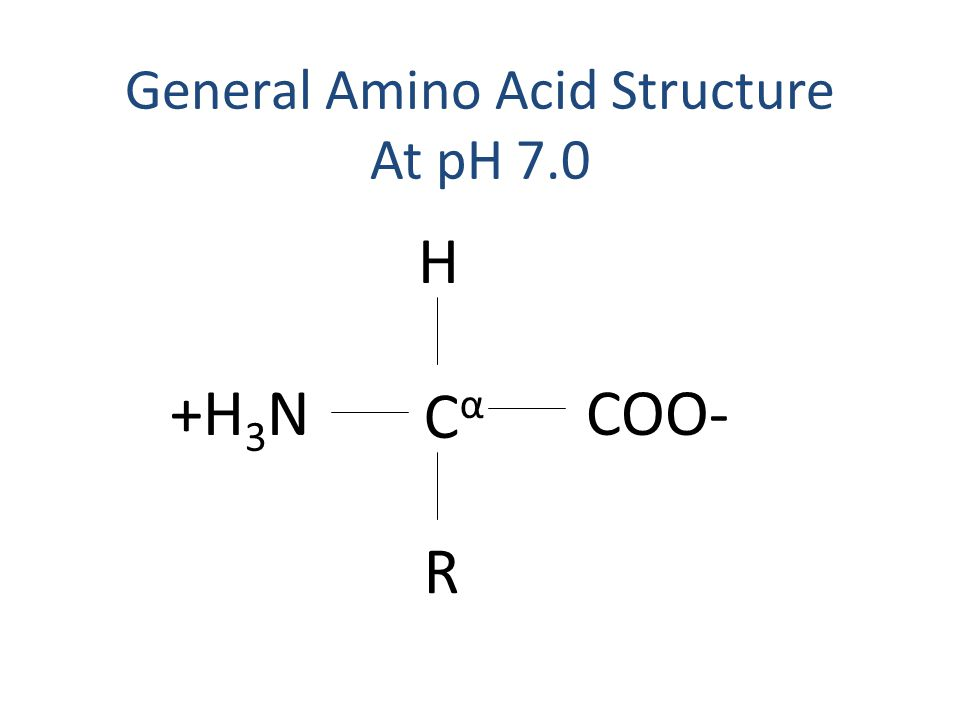 General Amino Acid Structure At pH 7.0 CαCα H R COO-+H 3 N