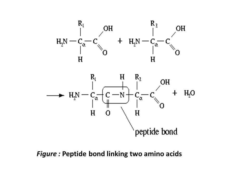 Model Molecule: Hemoglobin