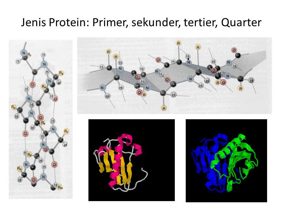 Jenis Protein: Primer, sekunder, tertier, Quarter