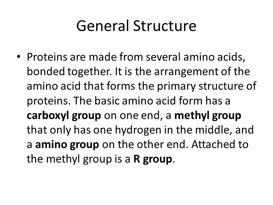 General Structure Proteins are made from several amino acids, bonded together.