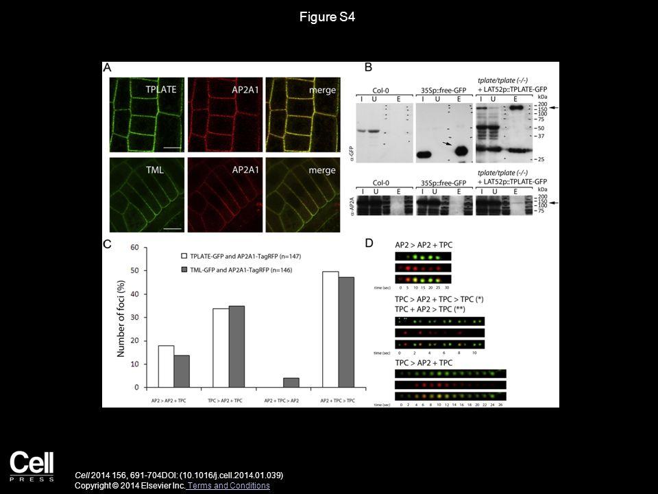 Figure S4 Cell 2014 156, 691-704DOI: (10.1016/j.cell.2014.01.039) Copyright © 2014 Elsevier Inc.