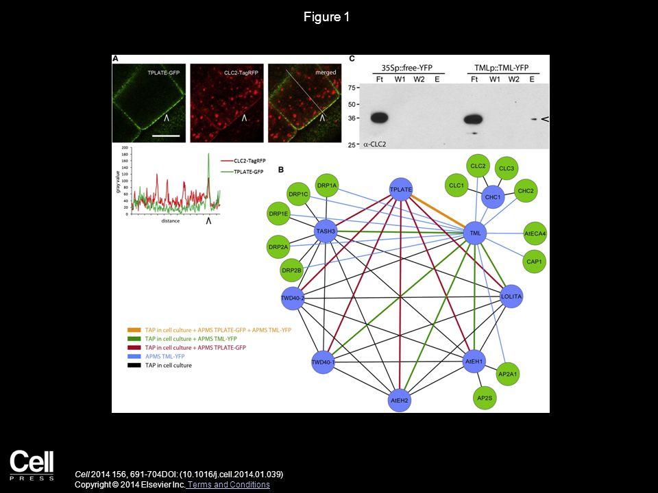 Figure 1 Cell 2014 156, 691-704DOI: (10.1016/j.cell.2014.01.039) Copyright © 2014 Elsevier Inc.