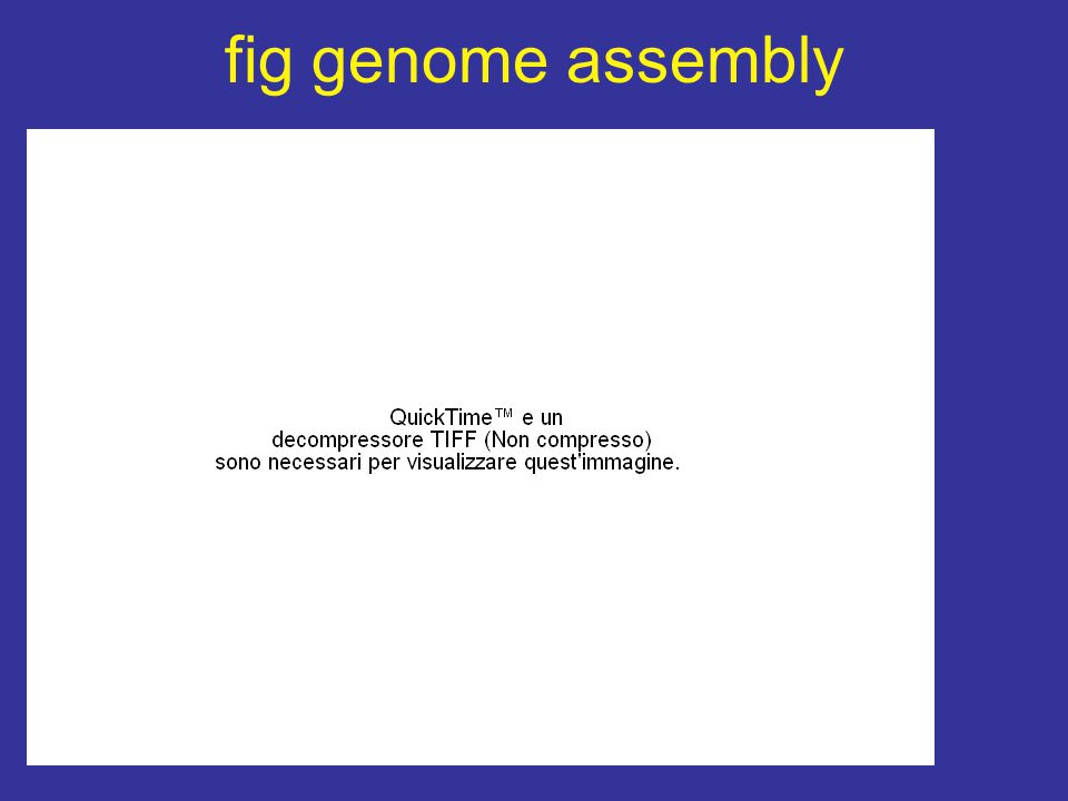 fig genome assembly