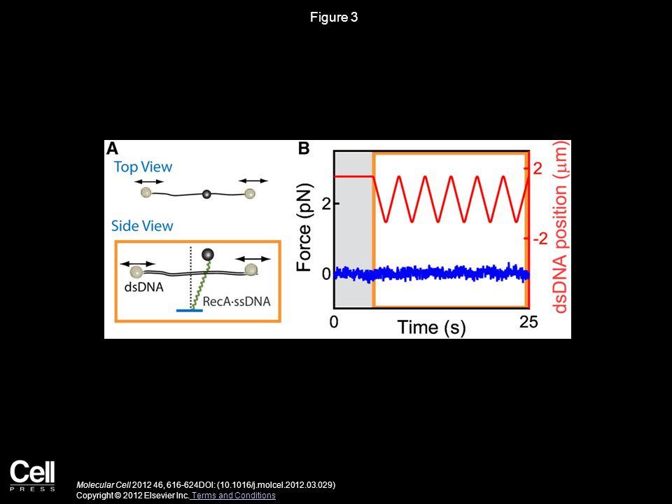 Figure 3 Molecular Cell 2012 46, 616-624DOI: (10.1016/j.molcel.2012.03.029) Copyright © 2012 Elsevier Inc.