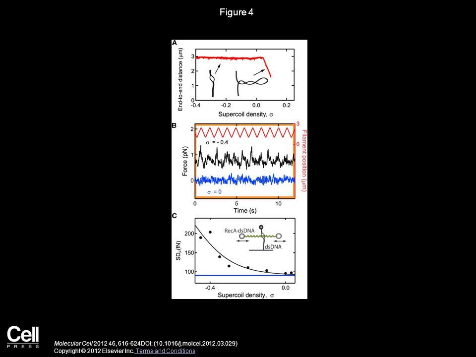 Figure 4 Molecular Cell 2012 46, 616-624DOI: (10.1016/j.molcel.2012.03.029) Copyright © 2012 Elsevier Inc.