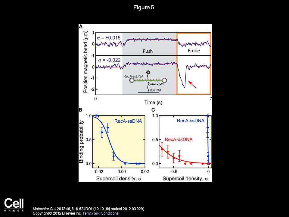 Figure 5 Molecular Cell 2012 46, 616-624DOI: (10.1016/j.molcel.2012.03.029) Copyright © 2012 Elsevier Inc.