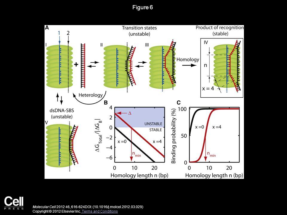 Figure 6 Molecular Cell 2012 46, 616-624DOI: (10.1016/j.molcel.2012.03.029) Copyright © 2012 Elsevier Inc.