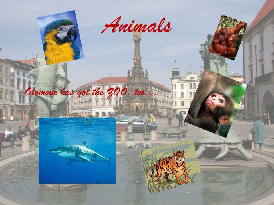 Animals Olomouc has got the ZOO, too…