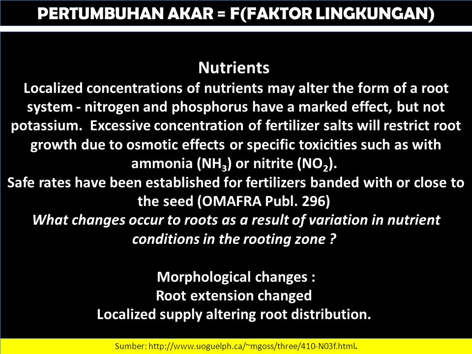 PERTUMBUHAN AKAR = F(FAKTOR LINGKUNGAN) Nutrients Localized concentrations of nutrients may alter the form of a root system - nitrogen and phosphorus have a marked effect, but not potassium.
