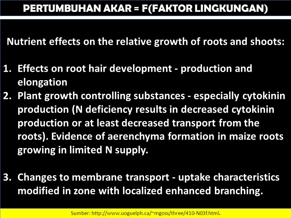 PERTUMBUHAN AKAR = F(FAKTOR LINGKUNGAN) Nutrient effects on the relative growth of roots and shoots: 1.Effects on root hair development - production and elongation 2.Plant growth controlling substances - especially cytokinin production (N deficiency results in decreased cytokinin production or at least decreased transport from the roots).