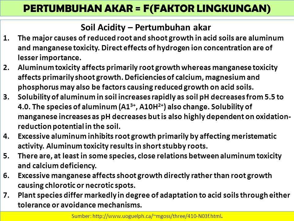 PERTUMBUHAN AKAR = F(FAKTOR LINGKUNGAN) Soil Acidity – Pertumbuhan akar 1.The major causes of reduced root and shoot growth in acid soils are aluminum and manganese toxicity.