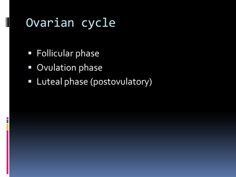 Ovarian cycle  Follicular phase  Ovulation phase  Luteal phase (postovulatory)