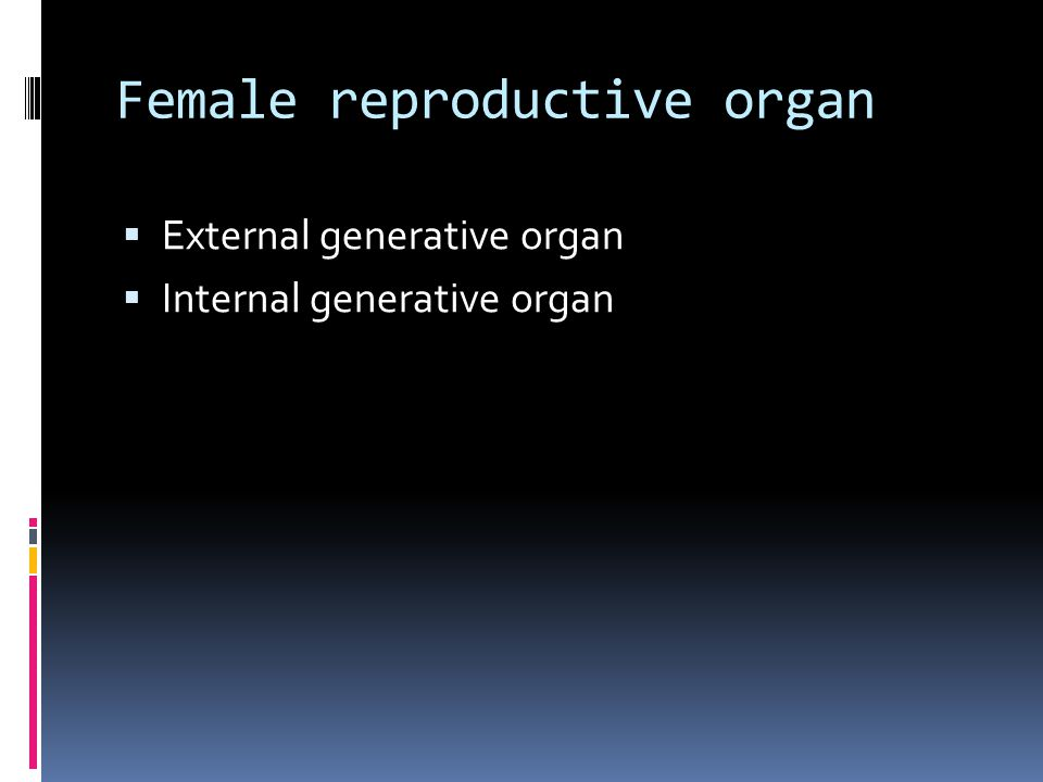 Female reproductive organ  External generative organ  Internal generative organ