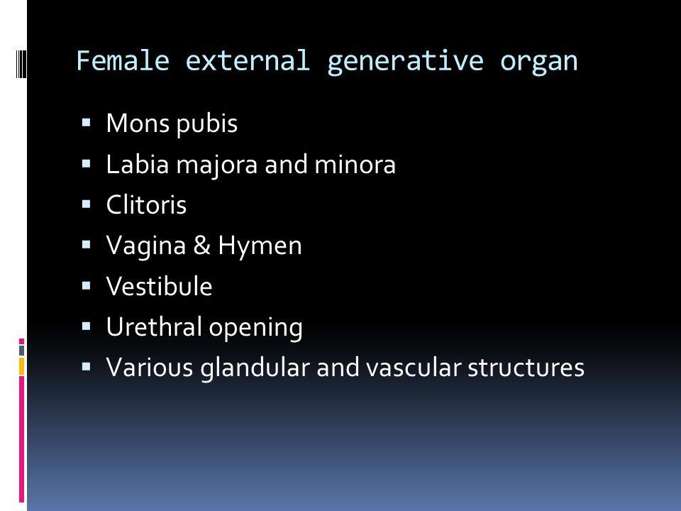 Female external generative organ  Mons pubis  Labia majora and minora  Clitoris  Vagina & Hymen  Vestibule  Urethral opening  Various glandular and vascular structures