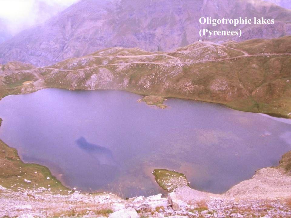 Oligotrophic lakes (Pyrenees)