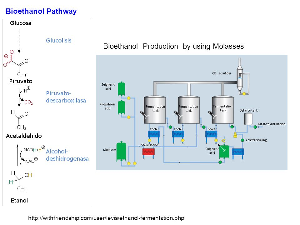 http://withfriendship.com/user/levis/ethanol-fermentation.php Bioethanol Production by using Molasses Bioethanol Pathway