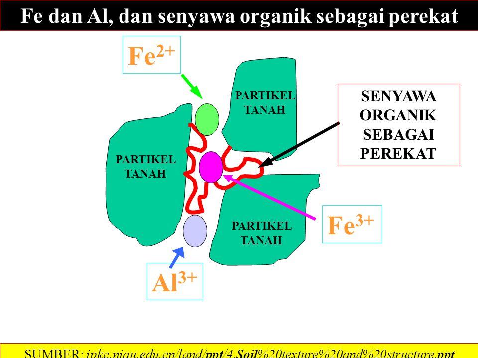 PARTIKEL TANAH Ca 2+ SENYAWA ORGANIK SEBAGAI PEREKAT SUMBER: jpkc.njau.edu.cn/land/ppt/4.Soil%20texture%20and%20structure.ppt PARTIKEL TANAH Ca++ dan senyawa organik sebagai perekat
