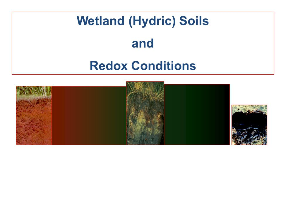 Wetland (Hydric) Soils and Redox Conditions