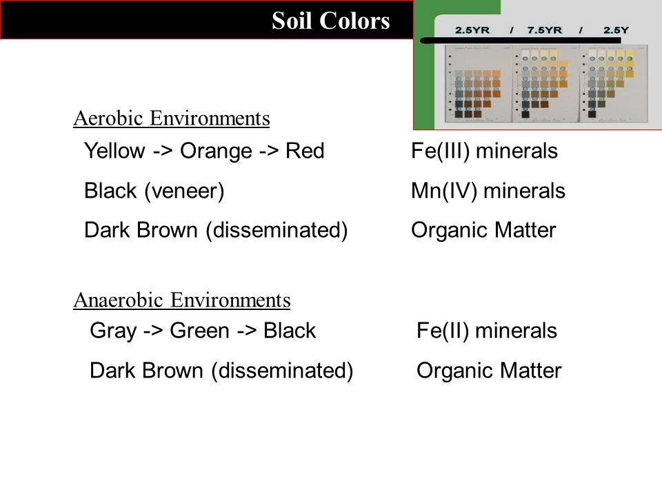 Soil Colors Yellow -> Orange -> RedFe(III) minerals Black (veneer)Mn(IV) minerals Dark Brown (disseminated)Organic Matter Aerobic Environments Gray -> Green -> BlackFe(II) minerals Dark Brown (disseminated)Organic Matter Anaerobic Environments