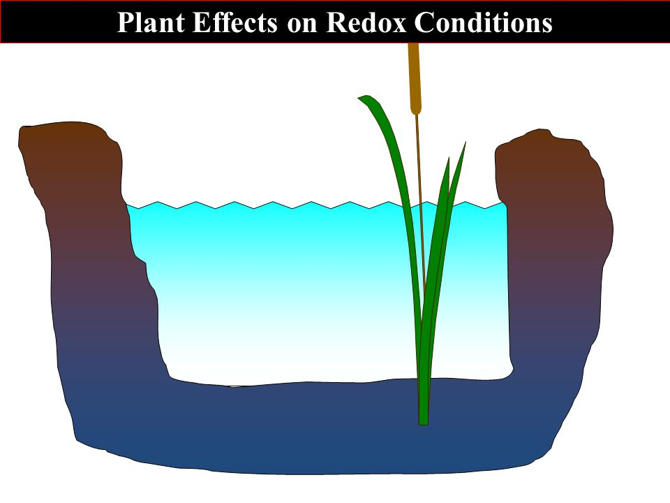 Plant Effects on Redox Conditions