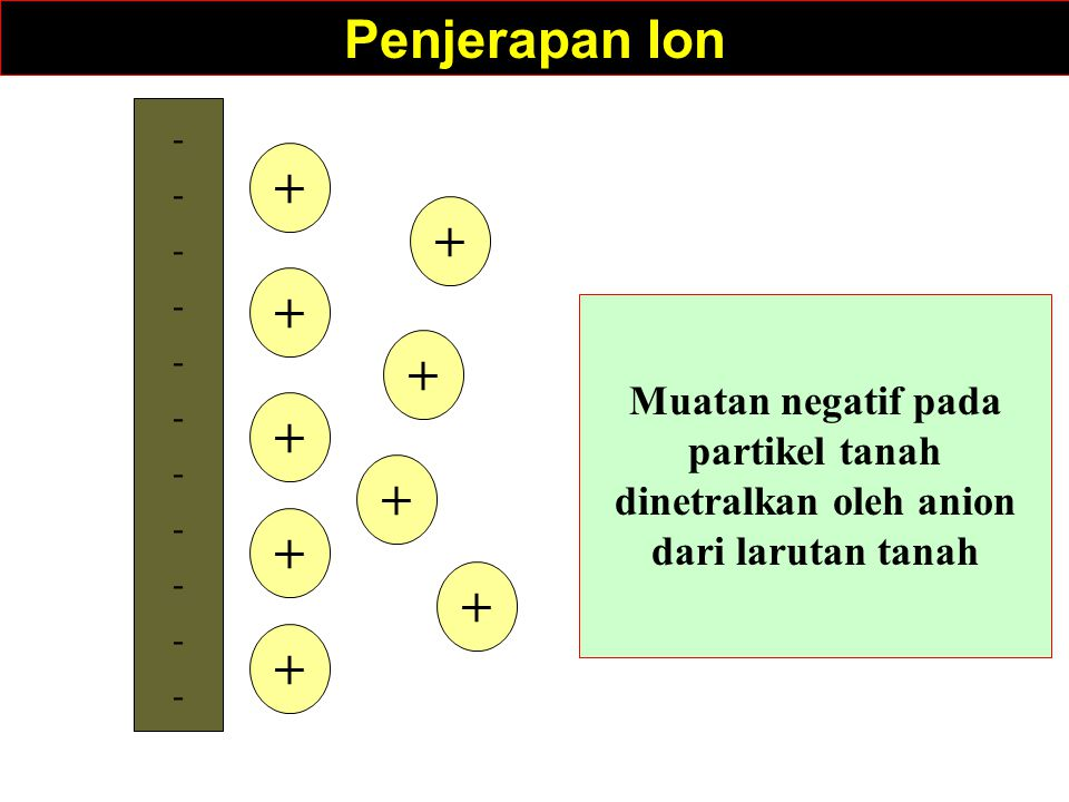 ---------------------- + + + + + + + + + Penjerapan Ion Muatan negatif pada partikel tanah dinetralkan oleh anion dari larutan tanah