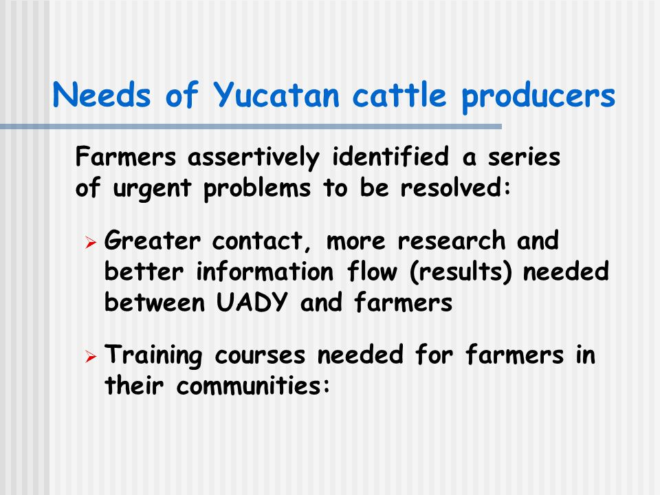 Needs of Yucatan cattle producers Farmers assertively identified a series of urgent problems to be resolved:  Greater contact, more research and better information flow (results) needed between UADY and farmers  Training courses needed for farmers in their communities: