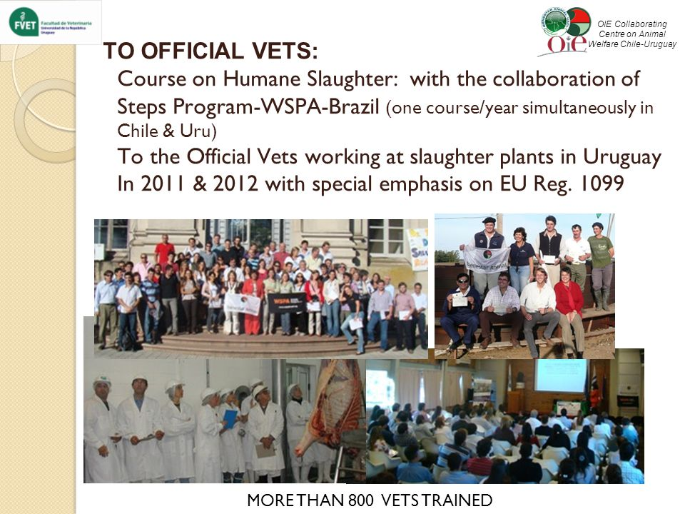 TO OFFICIAL VETS: Course on Humane Slaughter: with the collaboration of Steps Program-WSPA-Brazil (one course/year simultaneously in Chile & Uru) To the Official Vets working at slaughter plants in Uruguay In 2011 & 2012 with special emphasis on EU Reg.