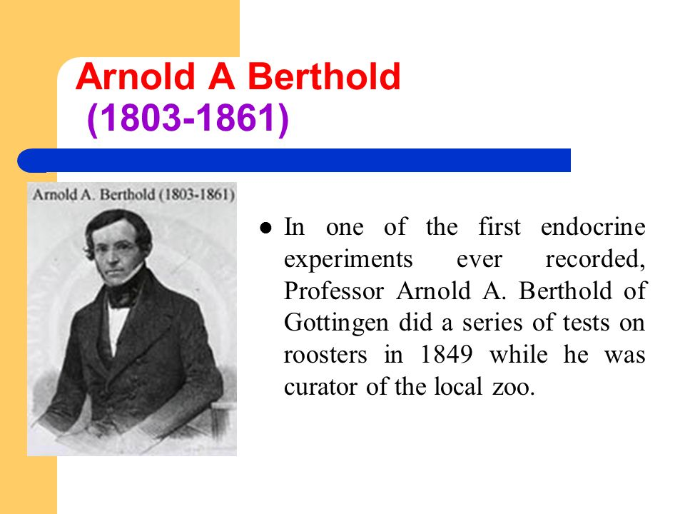 Arnold A Berthold (1803-1861) In one of the first endocrine experiments ever recorded, Professor Arnold A.
