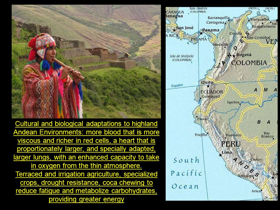 The Inca emperor was decimated by a smallpox pandemic in the 1520s, which triggered a seven-year civil war between rival claimants to the throne.