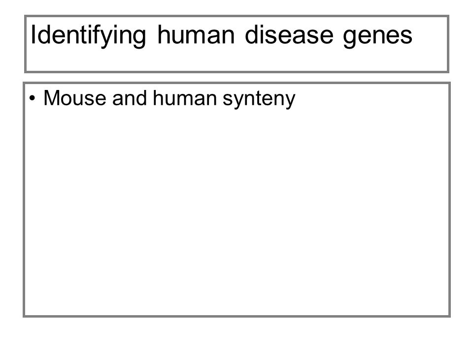 Identifying human disease genes Mouse and human synteny