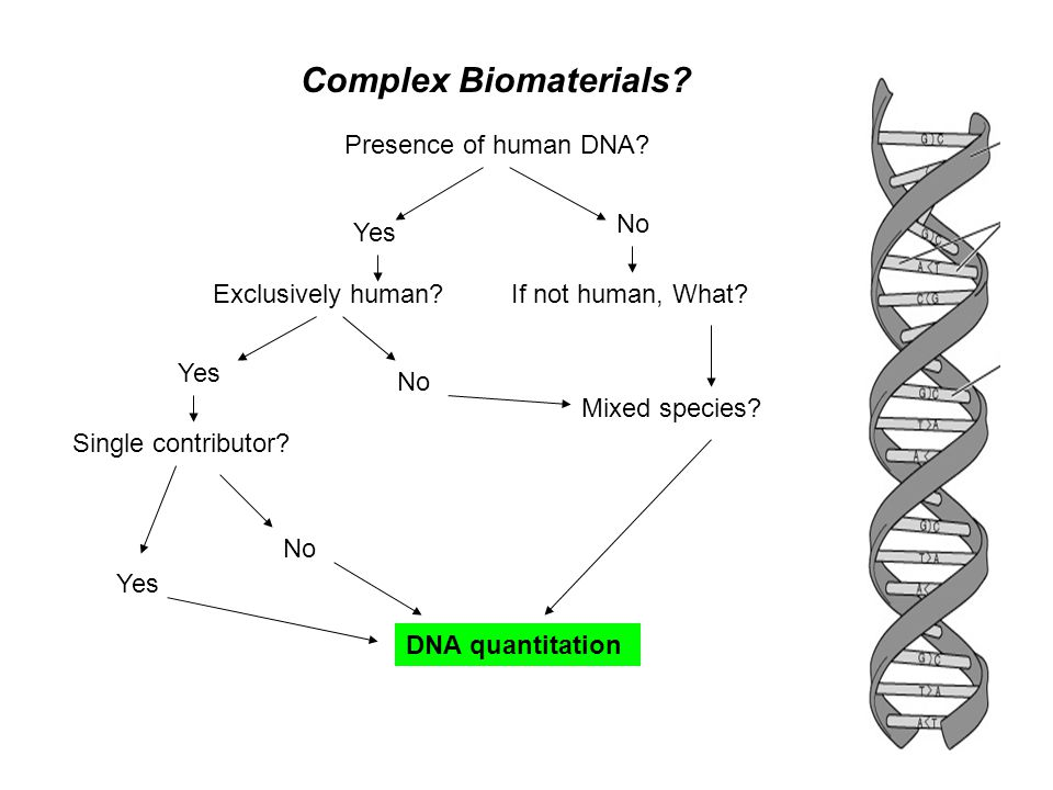 Presence of human DNA? Complex Biomaterials? Yes No Exclusively human?If not human, What? Yes Single contributor? No Mixed species? DNA quantitation Y