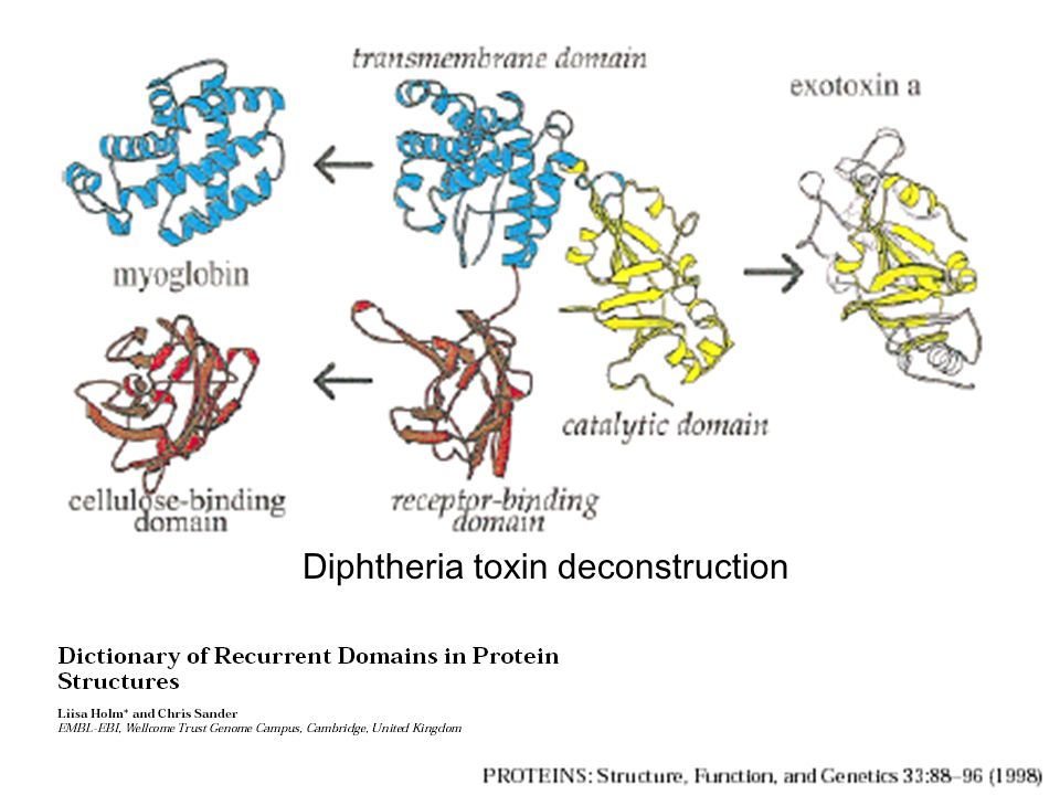 Diphtheria toxin deconstruction