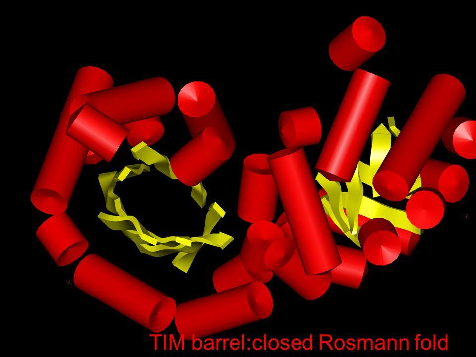 TIM barrel:closed Rosmann fold
