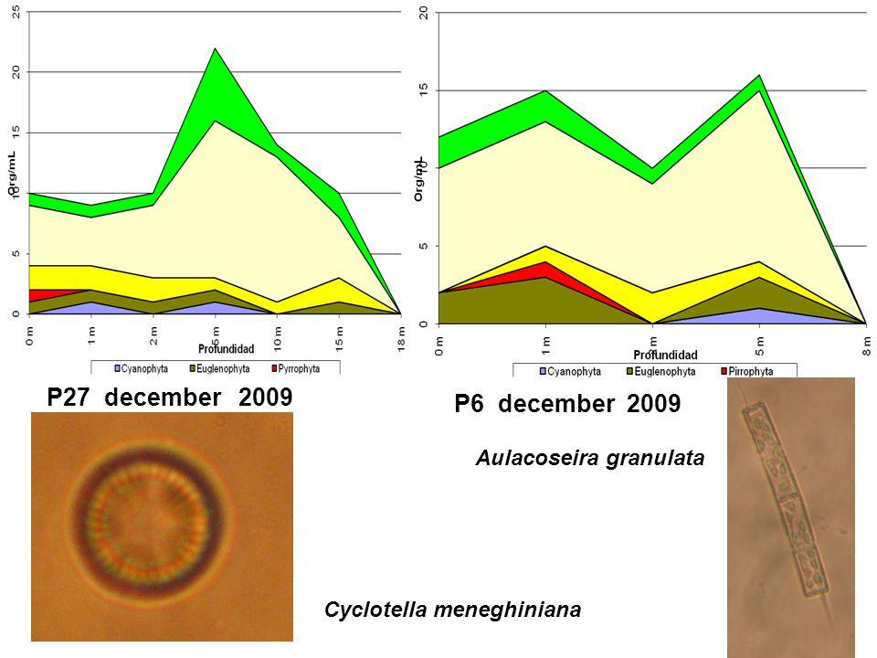 P27 december 2009 P6 december 2009 Cyclotella meneghiniana Aulacoseira granulata