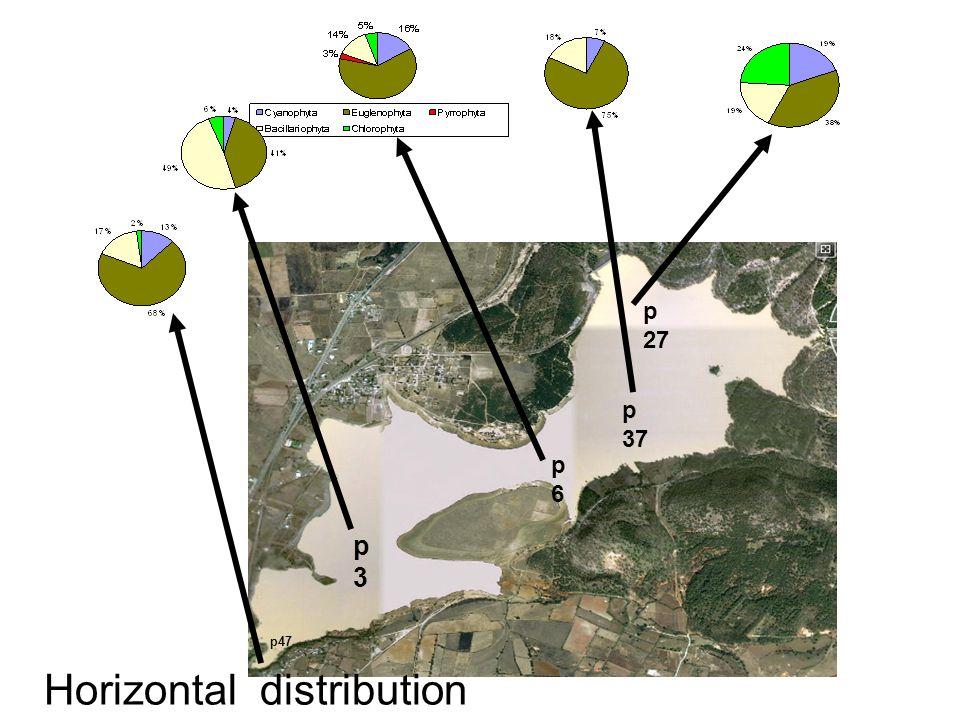 p 27 p3p3 p6p6 p47 p 37 Horizontal distribution