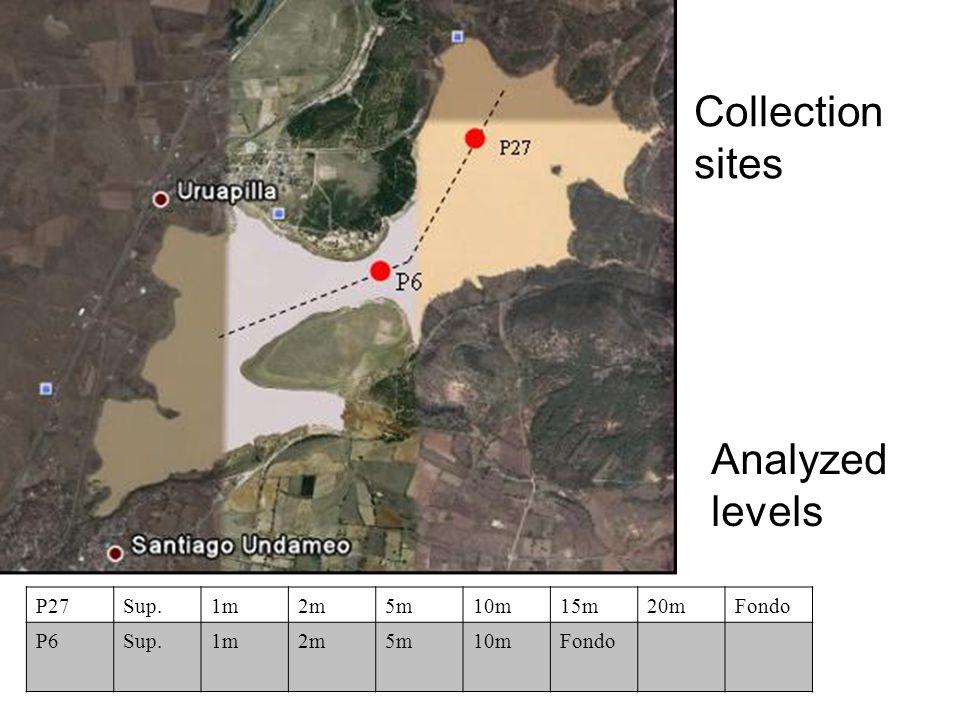 P27Sup.1m2m5m10m15m20mFondo P6Sup.1m2m5m10mFondo Collection sites Analyzed levels