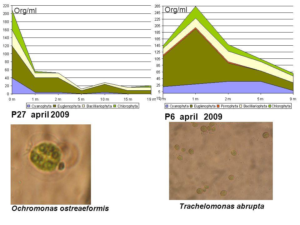 P27 april 2009 P6 april 2009 Ochromonas ostreaeformis Trachelomonas abrupta Org/ml