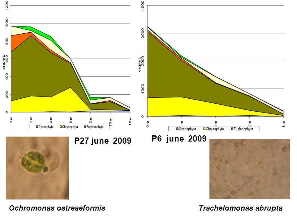 P27 june 2009 P6 june 2009 Trachelomonas abruptaOchromonas ostreaeformis