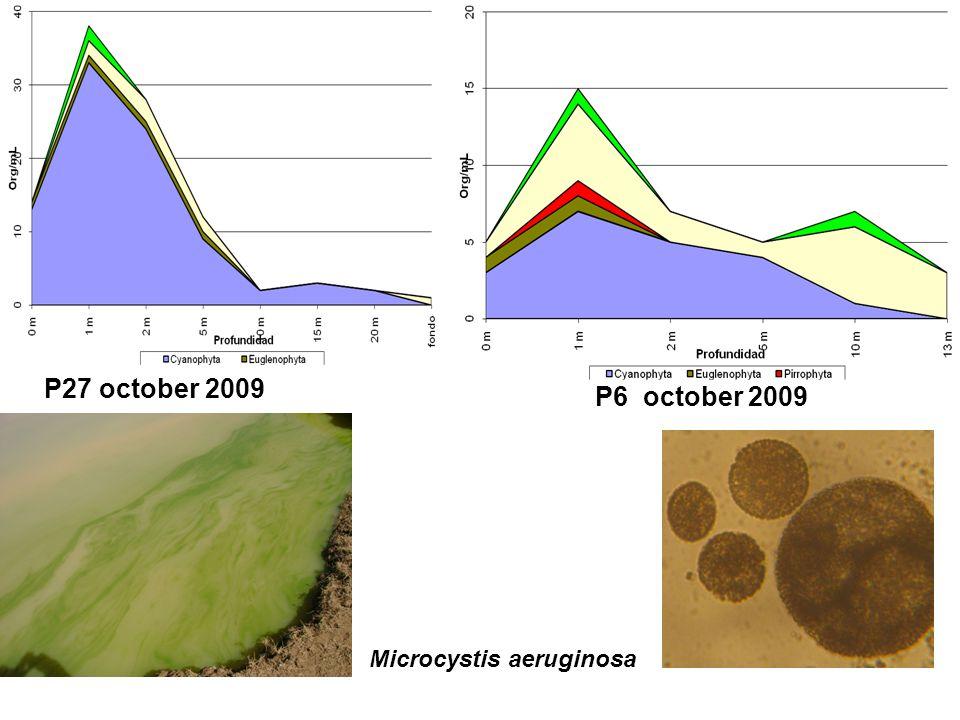 P27 october 2009 P6 october 2009 Microcystis aeruginosa