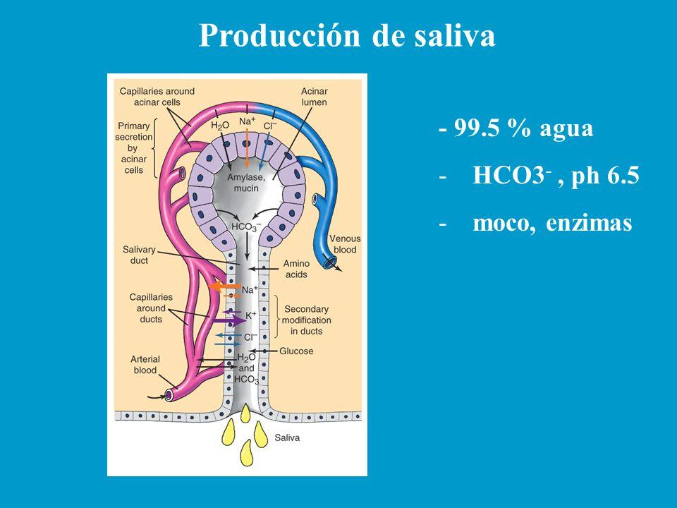 Producción de saliva - 99.5 % agua -HCO3 -, ph 6.5 -moco, enzimas
