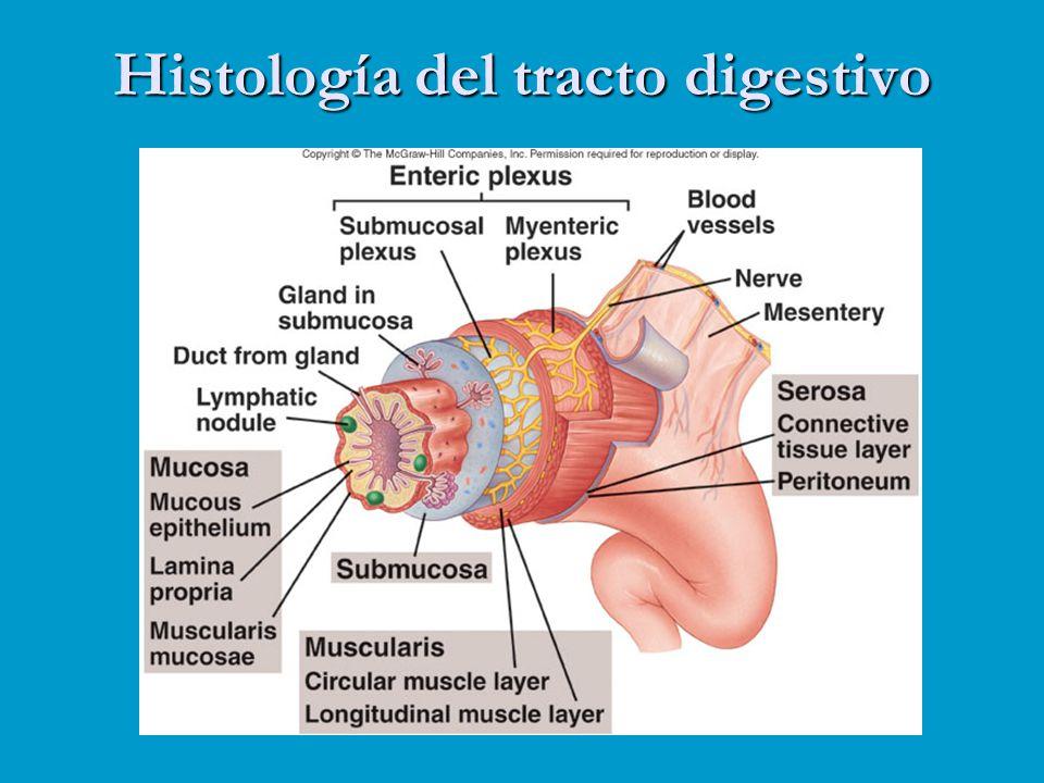 Histología del tracto digestivo