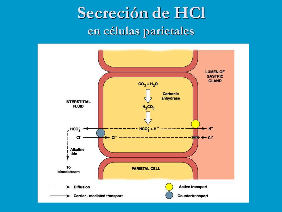 Secreción de HCl en células parietales